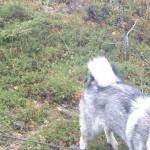 Profilbild på Karelare